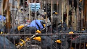 FOTO: Ratusan Satwa Ilegal Gagal Diselundupkan