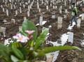 Kerabat Ungkap Kronologi Wan Abud Meninggal karena Covid-19