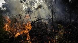 Perubahan Iklim RI, Walhi Singgung Kebakaran Hutan-Batu Bara