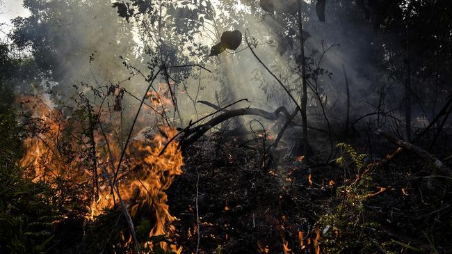 Walhi mengungkapkan beberapa sektor yang paling memperburuk perubahan iklim di Indonesia.