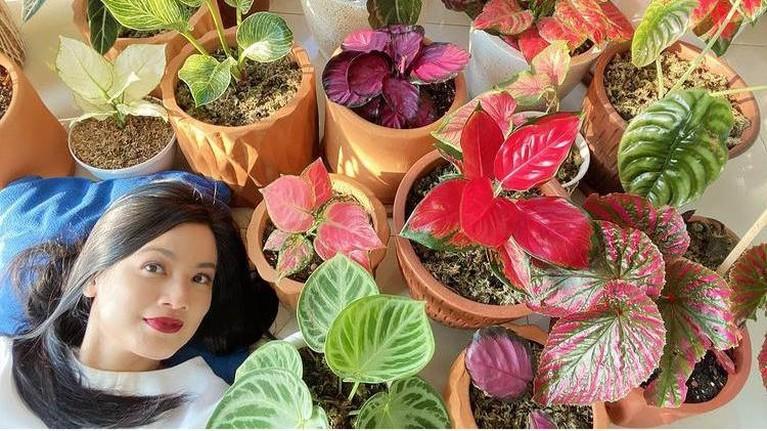 Berikut adalah artis-artis yang memiliki hobi mengkoleksi tanaman hias