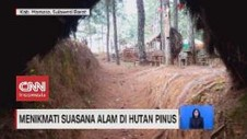 VIDEO: Menikmati Suasana Alam di Hutan Pinus
