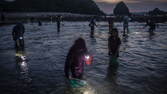Tradisi Bau Nyale di Lombok, NTB, tetap digelar di tengah pandemi. Petugas keamanan berjaga untuk mengawasi protokol kesehatan ribuan pengunjung.