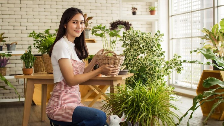 asia  beautiful woman taking care of her potted plants at home