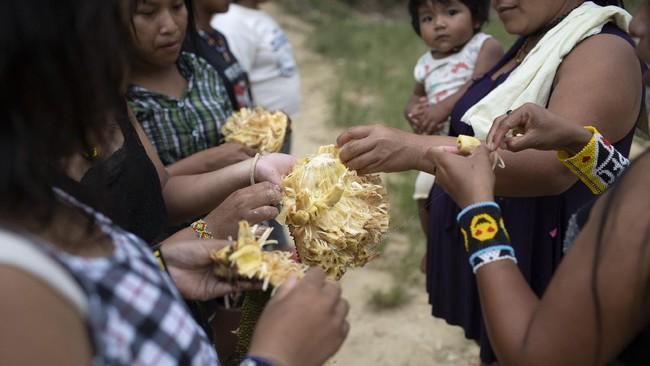 Nangka telah menjadi topik kontroversial di kalangan ahli ekologi dan beberapa aktivis lingkungan.