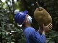 FOTO: Nangka Jadi Perdebatan Ahli Ekologi Brazil