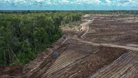 Luhut Targetkan 1.000 Hektare Lahan Food Estate Digarap 2021