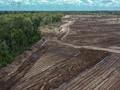 FOTO: Surga Singkong di Atas Ribuan Hektare Lahan Food Estate
