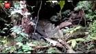 VIDEO: Goa Tempat Persembunyian Ali Kolora CS Ditemukan