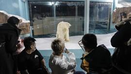 Kurung Beruang Kutub demi Keseruan Tamu, Hotel China Dikritik