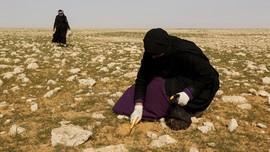 FOTO : Kisah Pemburu Truffle di Gurun Irak