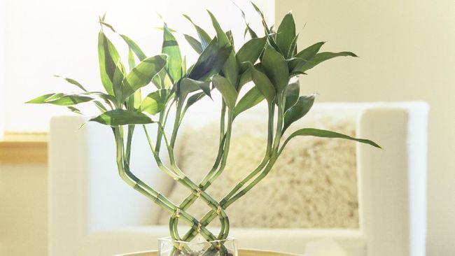 Tanaman hias tak cuma bisa ditanam di tanah. Sama seperti yang lainnya, tanaman hias juga bisa ditanam secara hidroponik.