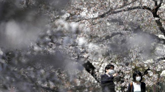 Beberapa ahli menjelaskan penyebab bunga sakura di Jepang mekar sebelum musimnya yang biasa terjadi pada bulan April.