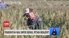VIDEO: Pemerintah Mau Impor Beras, Petani Menjerit