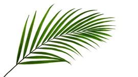 Minggu Palma, Kenangan akan Kedatangan Yesus di Yerusalem