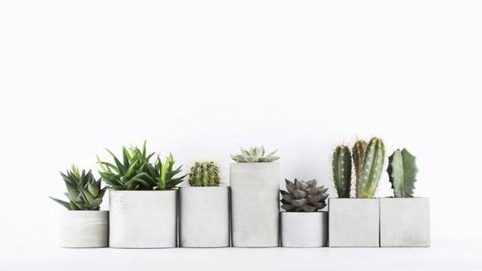 5 Jenis Tanaman Kaktus untuk Mempercantik Rumah