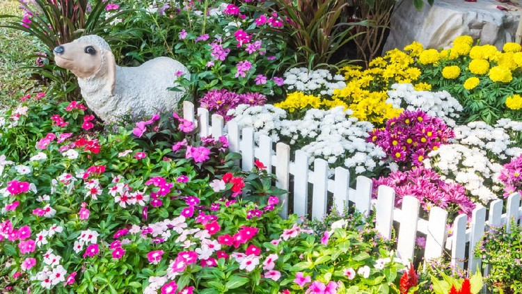 White picket fence surrounded by flowers in a front yard.