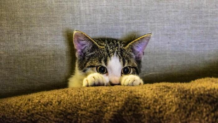 Obati Kucing Keracunan, Ini yang Harus Kamu Lakukan