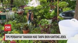 VIDEO: Tips Perbanyak Tanaman Hias Tanpa Bikin Kantong Jebol