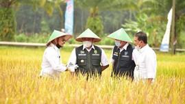 Mentan Kawal Panen & Gerakan Serap Gabah Petani di Sumsel