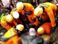 VIDEO: Tim SAR Temukan Korban Banjir NTT Tertimbun Lumpur