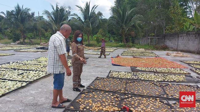 Ekspor asam gelugur asal Sumatera Utara (Sumut) mencapai 379,18 ton dengan nilai Rp5,95 miliar sepanjang kuartal I 2021.