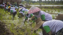 Mentan: Ada 8 Juta Petani Baru di Indonesia karena Pandemi