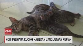 VIDEO: Hobi Pelihara Kucing Hasilkan Uang Jutaan Rupiah