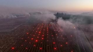 FOTO: Kala Kebun Anggur Dihangatkan Nyala Api Lilin