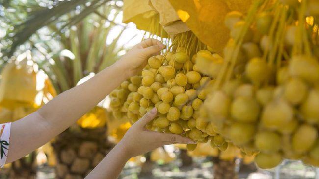 Sejumlah tanaman tergolong istimewa karena terdapat dalam Al-Qur'an. Berikut tanaman yang disebut dalam Al-Qur'an.