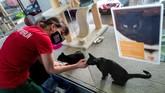 Pandemi Covid-19 telah membuat ledakan adopsi hewan peliharaan di Jerman untuk membantu orang meredakan kesepian dan kebosanan.