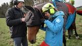 Tentara Swiss melakukan uji coba evakuasi kuda yang cidera dengan menggunakan helikopter.