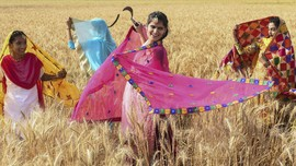 FOTO: Bhangra, Tarian Rakyat India Sambut Panen Raya