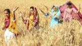 Kaum Sikh menampilkan tarian tradisional rakyat Punjab, Bhangra, jelang panen raya Baisakhi yang menandakan awal tahun baru.