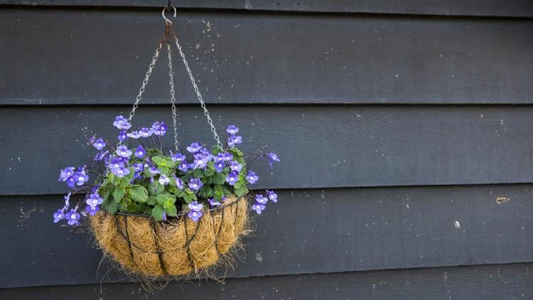 vintage garden scenery with purple flowers in pot
