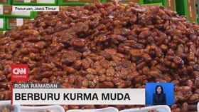 VIDEO: Berburu Kurma Muda