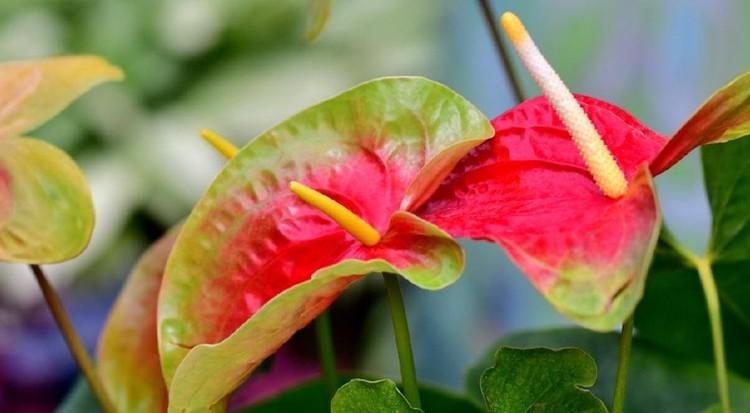 Merawat tanaman tak cukup hanya dengan memberi air dan pupuk. Namun, Bunda juga perlu tahu cara membersihkan daun tanaman hias. Berikut tipsnya, Bun!