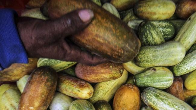 Petani dan pedagang timun suri di berbagai daerah sedang mencoba mencari berkah dari timun suri yang permintaannya naik karena Ramadan. Berikut fotonya.