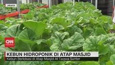 VIDEO: Kebun Hidroponik di Atap Masjid