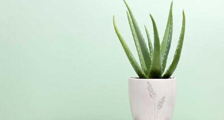 Menurut feng shui, ada beberapa jenis tanaman hias yang bisa mendatangkan hoki jika ditempatkan di rumah. Berikut ini deretan rekomendasinya, Bun.