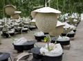 FOTO: Musik & Pijat, Rahasia Tanam Melon Jepang di Malaysia