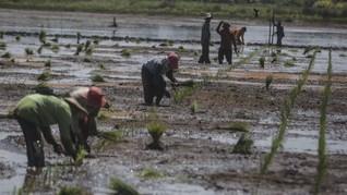 Kesejahteraan Petani RI Jauh di Bawah China dan Thailand
