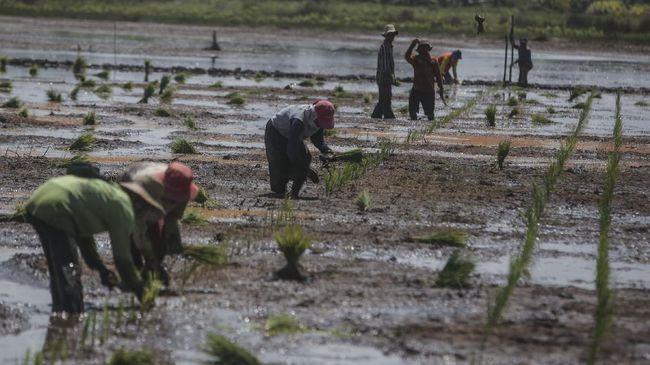 Bappenas menyebut kesejahteraan petani Indonesia lebih rendah dari China dan Thailand terlihat dari rendahnya nilai tukar petani dua negara tersebut.