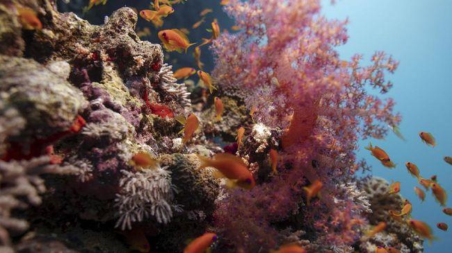 Selamat Hari Terumbu Karang Dunia! Berikut tujuh gugusan terumbu karang terbesar di dunia.