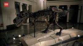 VIDEO: Studi Sebut T-Rex Ternyata Berjalan Sangat Lambat