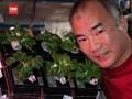 VIDEO: Astronaut Nasa Berhasil Panen Sayuran di ISS