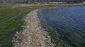 FOTO: Puluhan Ton Ikan Mati di Tepi Danau Lebanon