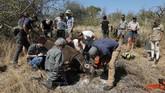 Perburuan badak di Afrika Selatan kembali marak seiring pelonggaran larangan pandemi virus corona.