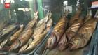 VIDEO: Menyantap Ikan Asap Khas Pantura Untuk Berbuka Puasa