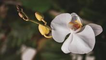 5 Tanaman Hias Berbunga Putih, Cocok untuk Dekorasi Lebaran